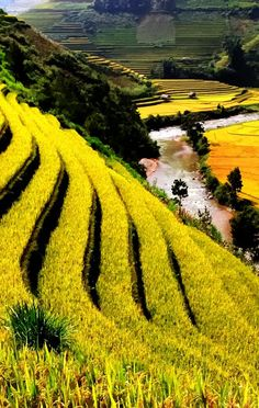 Agricultural Wonders in Vietnam   See more Amazing Snapz