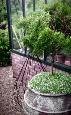 Träslövs Trädgård