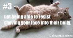 Cat Owner Problems #3