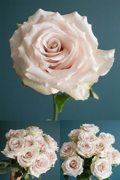 Popular Champagne Rose Varieties: Quicksand, Sahara, Early Grey, Sahara Sensation, and Menta Bridal Bouquet Fall, Blush Bouquet, Blush Roses, Wedding Bouquets, Blush Pink, Winter Wedding Flowers, Rose Wedding, July Wedding, Pink Flower Names