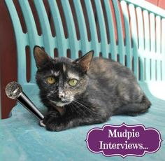 Melissa's Mochas, Mysteries and Meows: Mudpie Interviews: Inspector Dewey (w/Review & Giv...