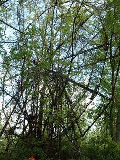Ferris Wheel  #abandoned #overgrown