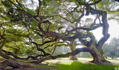 Go Inside a Historic South Carolina Plantation House Turned Family Hom Photos | Architectural Digest