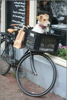 bycicle basket dog | Bicycle Baskets For Dogs 25 Lbs & Small Dog With Tangled Fur & Dog ...