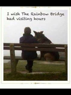 I wish The Rainbow Bridge had visiting hours dogs toys Dog Quotes, Animal Quotes, Rottweiler, I Love Dogs, Puppy Love, Amor Animal, Pet Loss, Rainbow Bridge, Pet Memorials