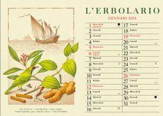 Fine del XV sec. - Caravella latina - Oceano Indiano Chiodi di garofano, pepe, cannella, zenzero - Tordo del Malabar