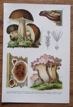 Botanischer Druck - Pflanzen Botanik Druck Atlas des Pflanzenreichs ca. 1920 6 Painting, Ebay, Art, Botany, Art Print, Printing, Plants, Art Background, Painting Art