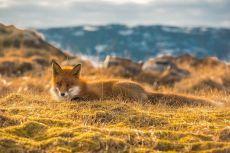 «Мастер маскировки». Норвегия. Автор фото — Виталий Новиков: nat-geo.ru/photo/user/40200/
