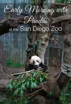 Visit the pandas on an intimate behind-the-scenes tour before the San Diego Zoo opens.