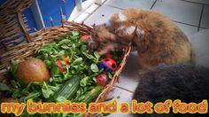 Die Kaninchen und Ihr Fresskorb - my bunnies and an lot of food (^_~)  My Channel:  https://www.youtube.com/user/kaninchenfanlucky/  Please subscribe:  http://www.youtube.com/subscription_center?add_user=kaninchenfanlucky   #kaninchen #bunny #rabbit #lapin #usagi #youtube