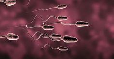10 Weird Experiments Using Animal Sperm