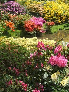 nature   garden   leonardslee gardens   england