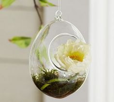 60  Adorable Spring Terrariums For Home Décor