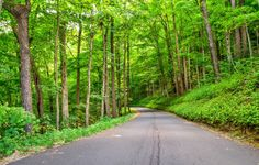 Information about Roaring Fork Smoky Mountains, including details about the Roaring Fork Motor Nature Trail and what you'll see when you visit the area.