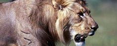 Au départ de Windhoek, les circuits filent vers le nord et le Parc national d'Etosha, véritable sanctuaire animalier où vivent 114 espèces de mammifères (éléphants, zèbre, gazelle, rhinocéros noir, lions ou encore léopards?) et près de 350 variétés d'oiseaux - #easyvoyage #easyvoyageurs #clubeasyvoyage #terresdevoyages #travel #traveler #traveling #travellovers #voyage #voyageur #holiday #tourism #tourisme #nature #evasion #namibie #parcnaturel #parc #park #etosha #afrique #africa #windhoek