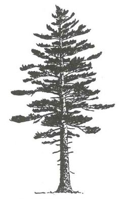 White Pine Tree Silhouette Tattoo Ideas Ideas The Effective Pictures We Offer You Pine Tattoo, Watercolor Tattoo Tree, Watercolor Trees, Watercolor Water, Silhouette Tattoos, Kiefer Silhouette, Kiefer Tattoo, Tree Tattoo Side, Evergreen Tree Tattoo