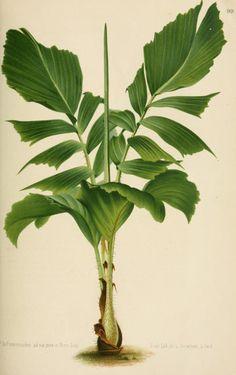 v.19 (1872) - L'Illustration horticole : - Biodiversity Heritage Library