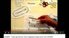 The Cure for all Viruses (Cancer) is GCMAF