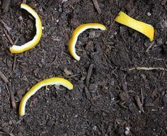 Gardening Vegetable Need to try this to keep the stray neighbor cats from PISSING and spraying in my front yard bushes. Plants, Garden Plants, Lawn And Garden, Outdoor Gardens, Veggie Garden, Yard Work, Garden Pests, Gardening Tips, Garden Projects