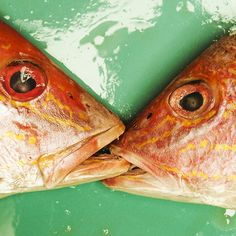 FISH KISSING ON DISH by Jessie Yip *Notes: love the humor behind it.