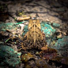 I wish you could have seen this frog up close. It looked prehistoric!