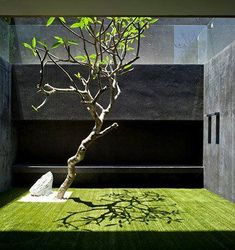 Interior garden | Garden inspiration for adamchristopherdesign.co.uk