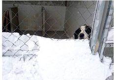 """Emergenza neve al sud, OIPA: """"Ecco come aiutare"""""""
