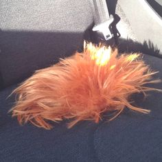 What the hell is in my car? A ginger Tribble?