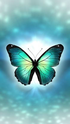 By Artist Unknown. Butterfly Kisses, Butterfly Art, Butterfly Sayings, More Wallpaper, Wallpaper Backgrounds, Scratchboard Art, Butterfly Pictures, Boxing Day, Butterfly Wallpaper