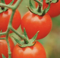Amid the bullets and break-ins and other bad stuff around her home, a South Peoria resident finally hit her snapping point and called the cops. About tomato plants.