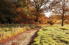 Autumn Morning Pathway - Conty Kildare, Ireland Print by Barry O Carroll Autumn Morning, Pathways, Nature Photos, Fine Art America, Ireland, Nature Photography, Instagram Images, Country Roads, Landscape
