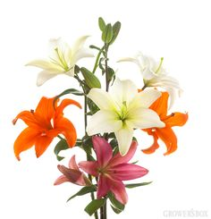 GrowersBox.com: Flowers: Asiatic Lilies Custom Box 40 Stems: Wholesale Flowers  Simple and easy to arrange, Asiatic Lilies make exceptional arrangements of wedding flowers with very little effort!