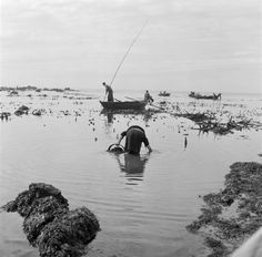 "Artur Pastor: "" Portugal, Póvoa de Varzim. Apanha do sargaço. Década de 50. "" Portugal, Fish Art, Vintage Photography, Historical Photos, Lisbon, Photo Art, Outdoor, Silhouettes, Backgrounds"