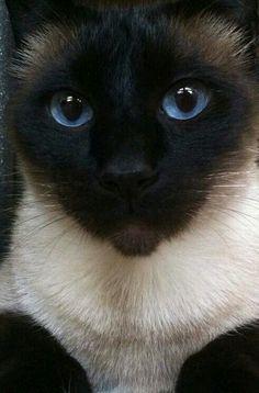 Looks like my cat. ❤️