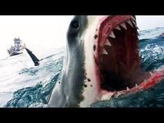 Megalodon Monster Killer Shark Still Alive(full documentary)HD - YouTube