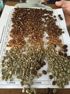 Understanding Roast-to-Cup Differences through Profile Translation Analysis