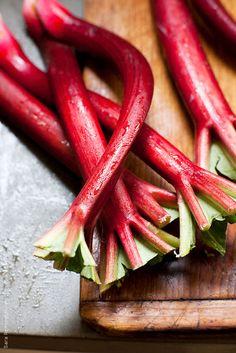 Rhubarb by Sara Remington | Stocksy United
