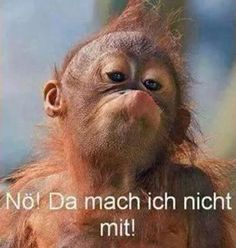 Lustige Bilder und Sprüche, tolle Witze und alles was Spaß macht. Täglich neu Funny pictures and sayings, great jokes and everything that is fun. Primates, Animal Pictures, Cool Pictures, Funny Pictures, Pictures Images, Cute Baby Animals, Funny Animals, Baby Orangutan, Chimpanzee