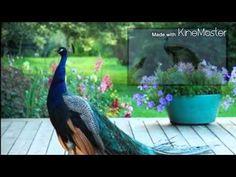 Good morning | Radha Krishna | (gif) - YouTube
