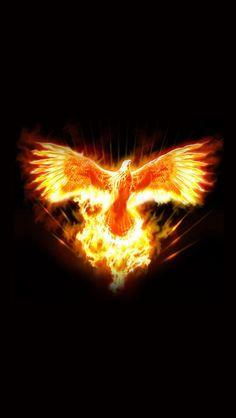 pictures of a phoenix firebird - Aztec Media Yahoo Search Results Phoenix Art, Phoenix Rising, Phoenix Images, Phoenix Animal, Albedo, Jean Michel Jarre, Rise From The Ashes, Firebird, Tattoo Ideas