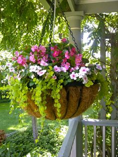 hanging basket of impatiens, begonias and lychamachia