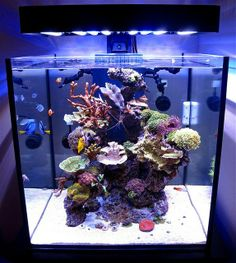 Aquarium Lit with PanoramaLEDFixture - salt water fish tank Coral Reef Aquarium, Saltwater Aquarium Fish, Nature Aquarium, Saltwater Tank, Marine Aquarium, Freshwater Aquarium, Marine Fish Tanks, Marine Tank, Nano Reef Tank