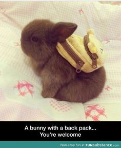 Bunny backpack...you're welcome