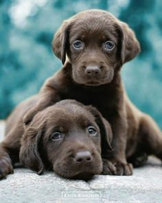 Keith Kimberlin : Choc Labs - Mini Poster 40cm x 50cm (new & sealed)