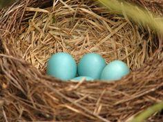 Robins egg blue!