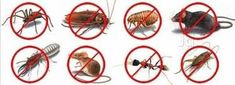 Best Pest control Services In UAE. To Avail the service, Call us on