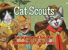 Have You Ordered Your FREE Cat Scouts Membership Cards? - Cat Scouts