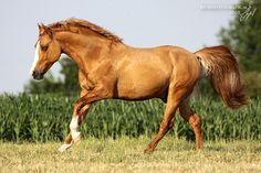 horse / beautiful