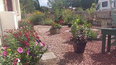My garden in Devon, UK. July 2015. cc