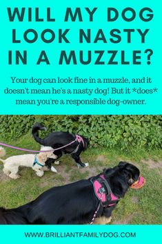Dog Behavior Your muzzled dog will be able to enjoy group walks again! Find out here how to teach your dog to love wearing a muzzle Dog Training Books, Dog Training Tips, Potty Training, Training Schedule, Reactive Dog, Dog Minding, Dog Muzzle, Easiest Dogs To Train, Aggressive Dog